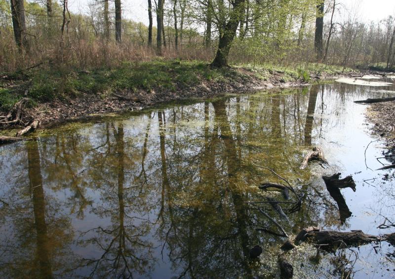 Dřevní hmota v korytech - soutok Moravy a Dyje