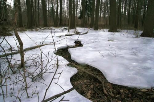 Sníh v lese
