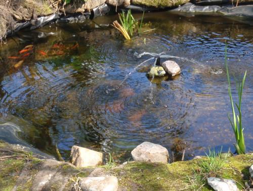 Zahradní jezírko s vodotryskem