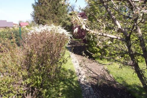 Vodorovný zasakovací průleh, jehož cílem je zadržet na zahradě co nejvíce dešťové vody pro pěstované ovocné stromy. Autor fotografie: František Hovjadský