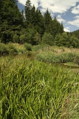Pohled na řeku Olši u Bukovce. Ilustrační obrázek (Autor: Veronika Kalníková).