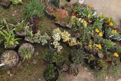 Rostliny připravené pro zasazení do vertikální zahrady.