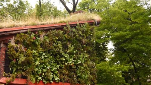 A jak by mohla vertikální zahrada vypadyt, až rostliny povyrostou? (Fotka experimentální plochy Ing. Zuzany Klusové v Dolní Lištné). Zdroj: carokvety.cz